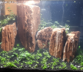 The Myanmar Petrified 10-20cm - aquarium decoratie stenen