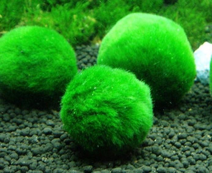 Mosballen Medium 4-6 cm 10 stuks