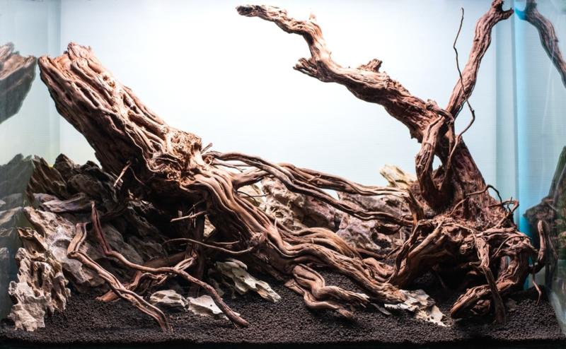 Golden wood 40-55cm