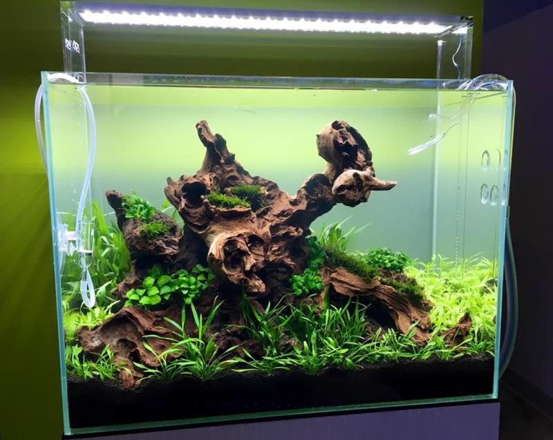 Coral wood 30-40cm