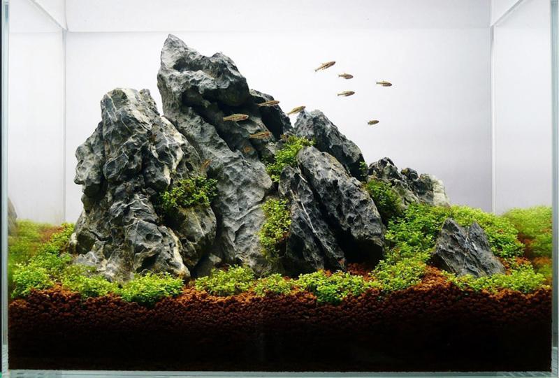 Ordinairy Tsinglung 10-20cm  - aquarium decoratie steen
