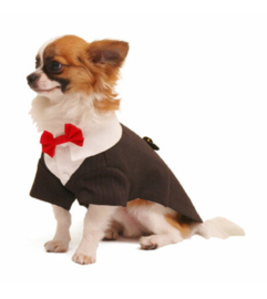 POOCH OUTFITTERS Ruff Ruff Tux smoking