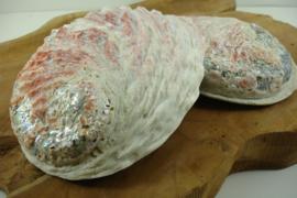[ N-0053 ] Abalone Schelp, +/- 14 cm. per stuk