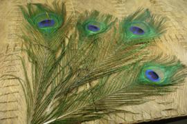 [ 8715 ] Pauwen Veren +/- 30 cm. Groen met Paars, per 4 stuks