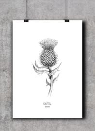 Distel| A4 Poster