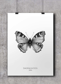 Dagpauwoog | A4 Poster