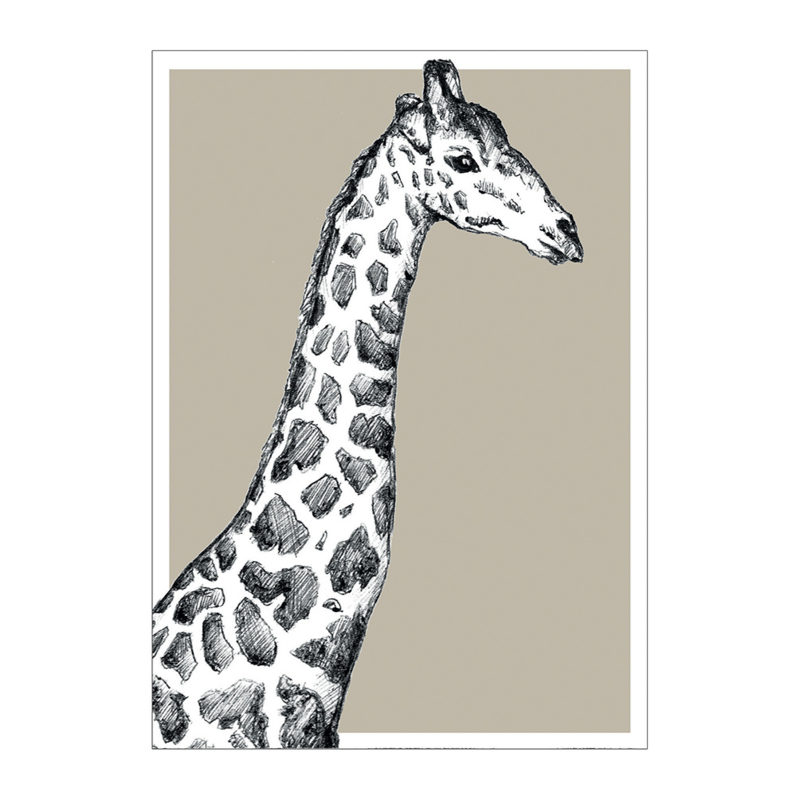 WILDLIFE | Giraffe
