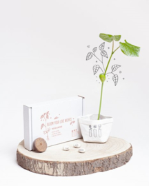 Bloom Your Love Wishes Wensdoosje