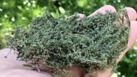 Doornstruiken - olijfgroen