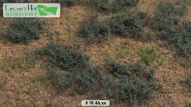 Woestijn met bijvoet - type 2