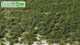 Graspollen weiland zomer - kort
