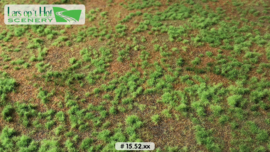 Pine forest floor - type 1
