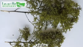 Bushes summer - fine leaves