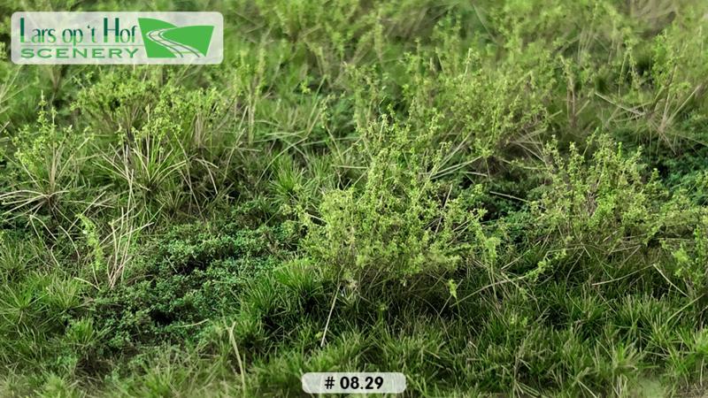 Wild verge with weeds summer