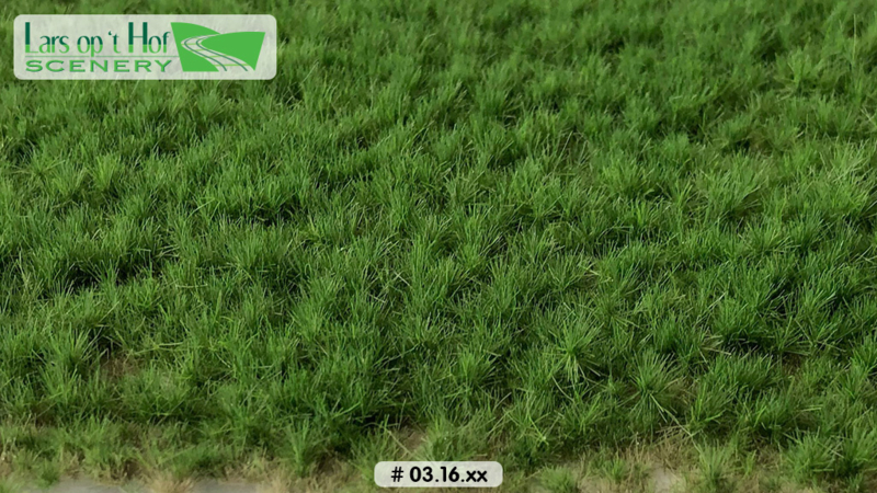 Grass tufts pasture spring - long