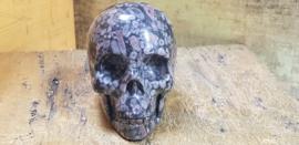 Fossiel Crinoïde - Zeelelie Schedel