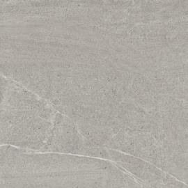 Limestone Oyster 2cm
