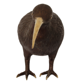Pole to Pole - H27 Kiwi Bird L