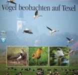 Vögel beobachten auf Texel