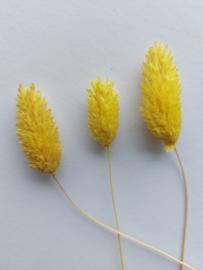 Droogbloemen | Geel | 3 stuks