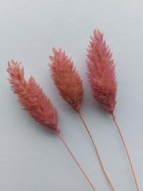 Droogbloemen | Roze | 3 stuks