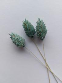 Droogbloemen | Blauw | 3 stuks