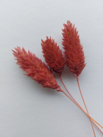 Droogbloemen | Oudroze | 3 stuks