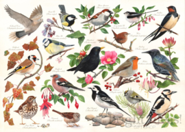 House of Puzzles - Birds in My Garden - 1000 stukjes