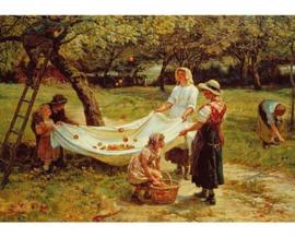 Wentworth - The Apple Gatherers - 40 stukjes