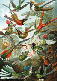 Piatnik Ernst Haeckel - Hummingbirds - 1000 stkjee