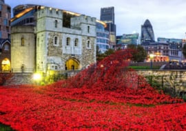 Wentworth - Tower of London Remembrance - 40 stukjes