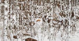 SunsOut 74415 - Woodland Encounter - 1000 stukjes