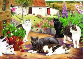 House of Puzzles - Cool Cats - 500XL stukjes