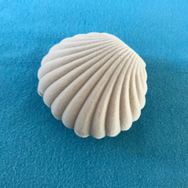 Grijs fluweel shell schelp