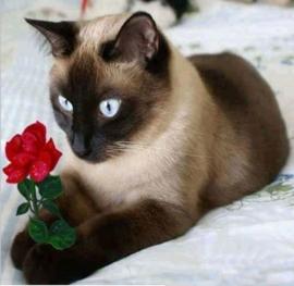 Partial diamond painting kat met bloemetje 30 x 30 cm