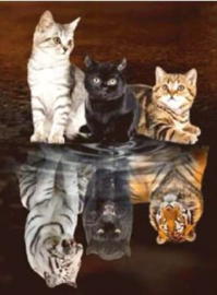 Full Diamond Painting katten - tijgers 40 x 60 cm