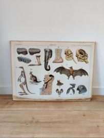 Vintage dubbelzijdige dieren kaart