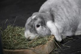 Hooi, de brandstof voor konijnen!