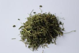 Koriander/ Coriandrum sativum L.