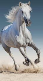 Paarden badlaken/ strandlaken | wit
