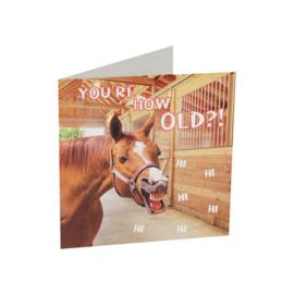 Paarden wenskaart  funny horse