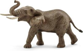 Afrikaanse  olifant mannelijk