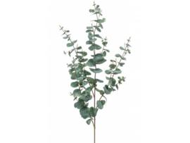 Tak - Eucalyptus - 61cm