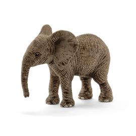 Afrikaanse olifant baby