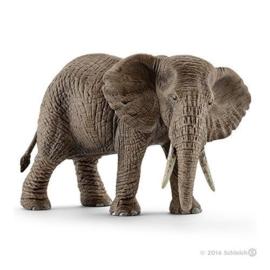 Afrikaanse olifant vrouwelijk