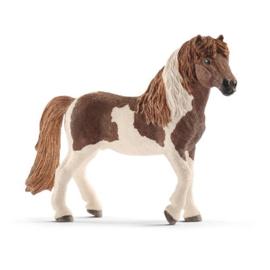 Ijslandse pony hengst