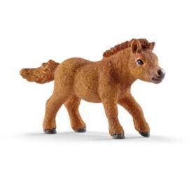 Mini Shetland veulen