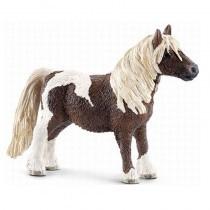 Shetland pony hengst