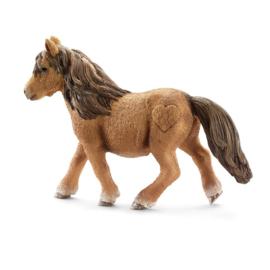 Shetland Pony Merrie