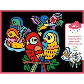 Djeco - Viltkleurplaten Babyvogels